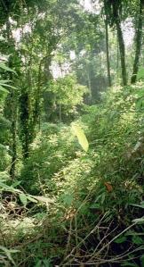 Jureia Jungle - Itariri