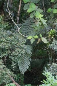 Jureia Jungle - Amoreiras - Pedro de Toledo