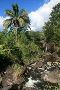 Jureia Mountain Stream - Sitio Azeite - Itariri