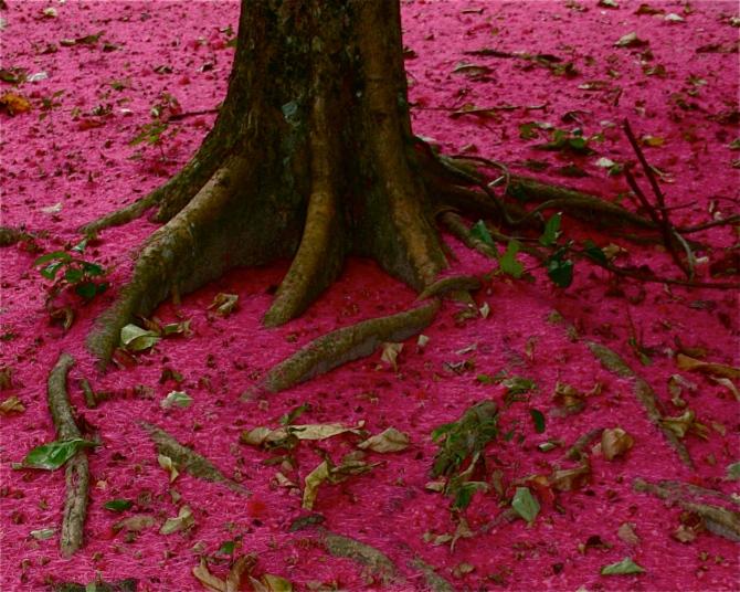 Jambo blossom